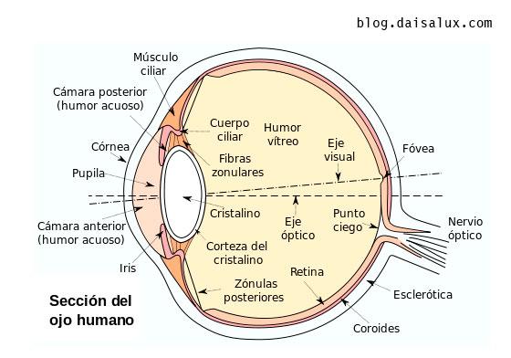 daisalux-iluminacion-alumbrado-emergencia-partes-ojo-lentes